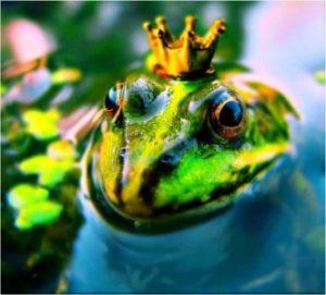 жаба в воде