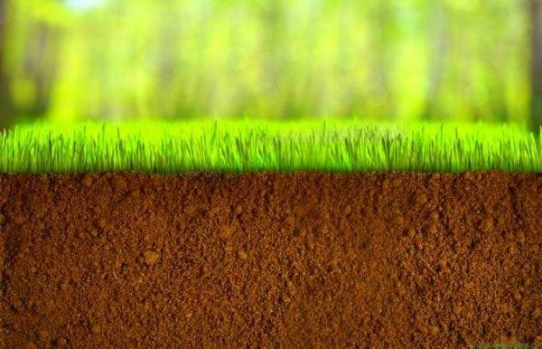 Земля и трава