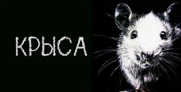рисунок крысы
