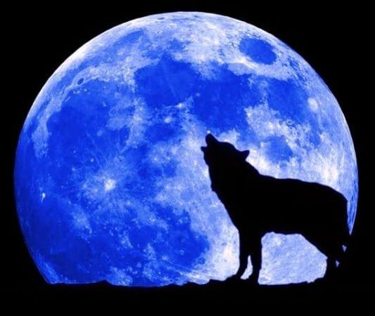 волк и полная луна