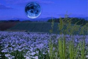 посев при луне