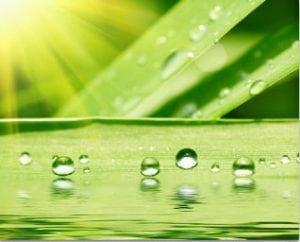 растение и солнце