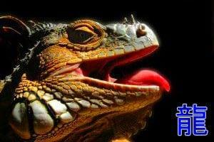 язык дракона