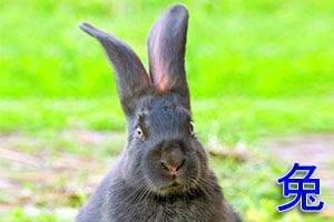 кролик в гороскопе
