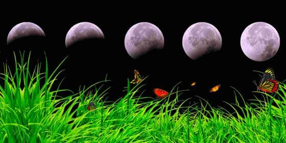 фаза луны и растения