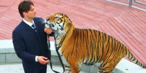 Мужчина и тигр