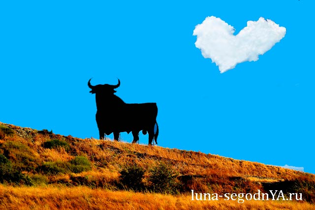 сердце быка